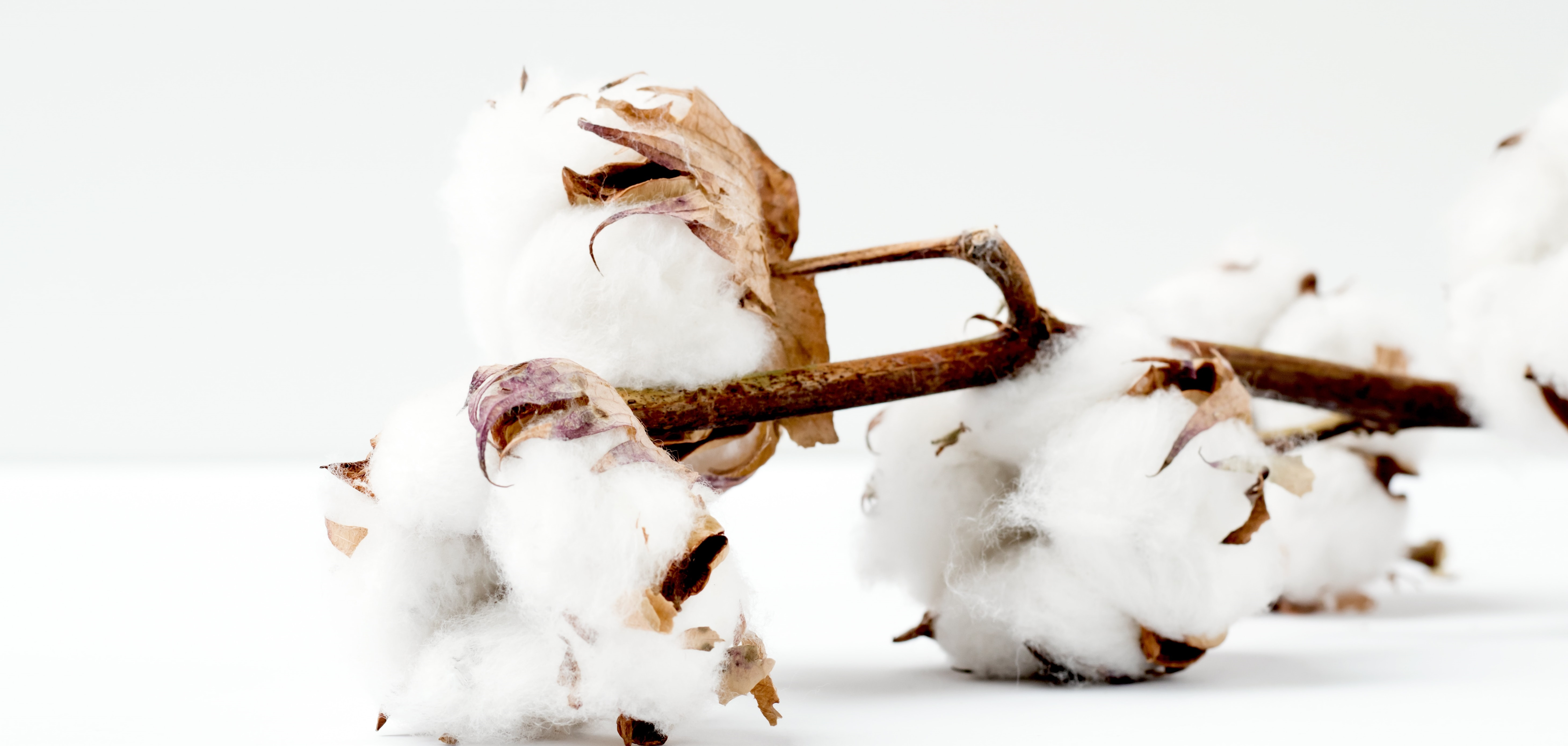 6 Fun Facts About Cotton